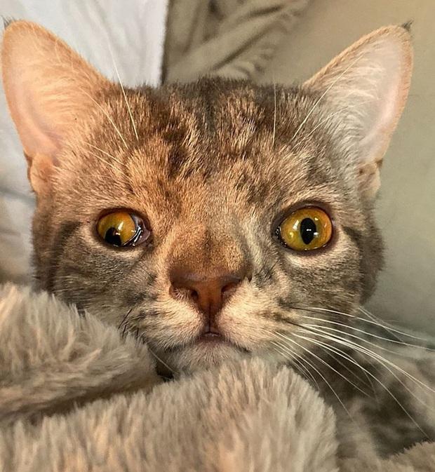 Không chỉ riêng con người, mèo cũng bị mắc hội chứng Down - Ảnh 4.