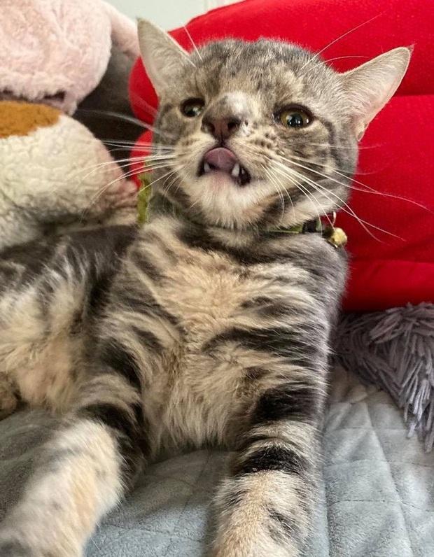 Không chỉ riêng con người, mèo cũng bị mắc hội chứng Down - Ảnh 5.
