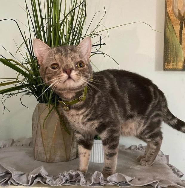 Không chỉ riêng con người, mèo cũng bị mắc hội chứng Down - Ảnh 6.