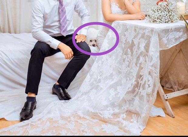 Biểu cảm ngỡ ngàng của chú chó khi bất ngờ bị bế khỏi sân khấu khi đang chụp ảnh với cô dâu chú rể khiến nhiều người bật cười - Ảnh 3.