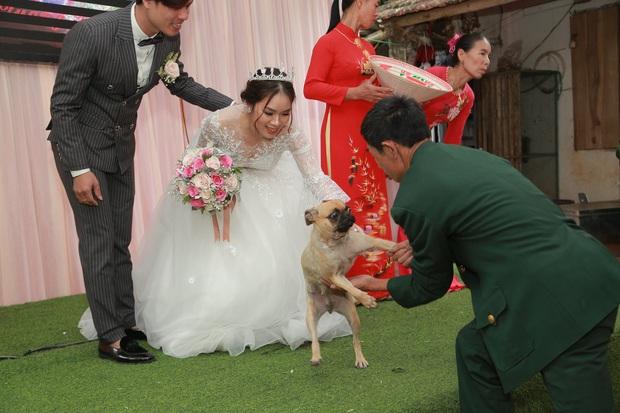 Biểu cảm ngỡ ngàng của chú chó khi bất ngờ bị bế khỏi sân khấu khi đang chụp ảnh với cô dâu chú rể khiến nhiều người bật cười - Ảnh 1.