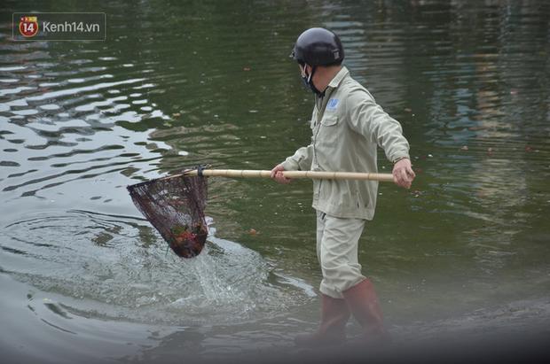 Hà Nội: Cá chép vàng chết nổi khi vừa được thả xuống hồ Hoàng Cầu ngày ông Công ông Táo - Ảnh 6.