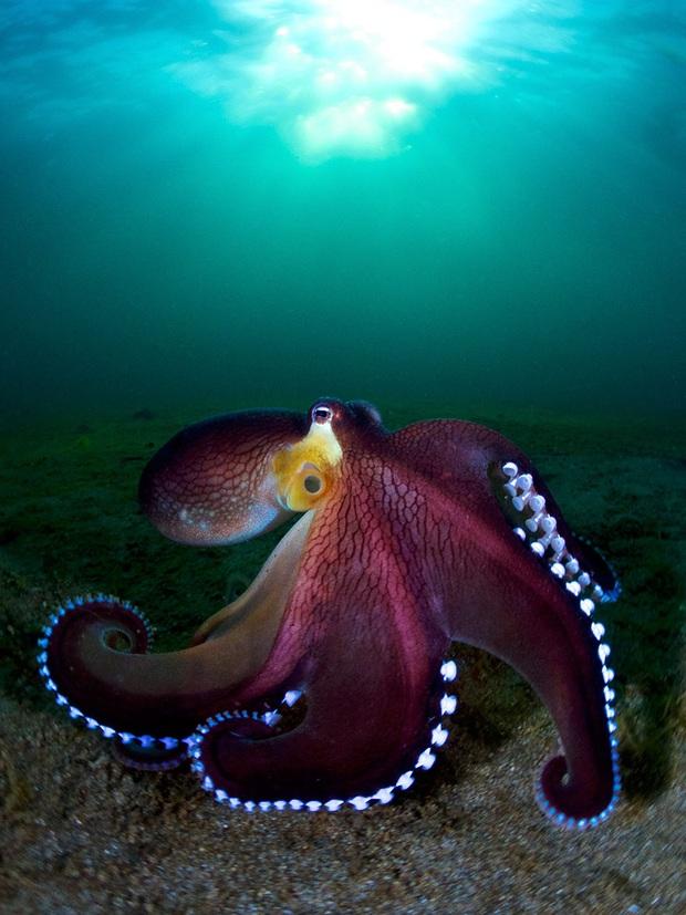 Loạt ảnh đầy ấn tượng về cuộc sống đa màu sắc và cũng không kém phần diệu kỳ phía dưới đại dương sâu thẳm - Ảnh 1.