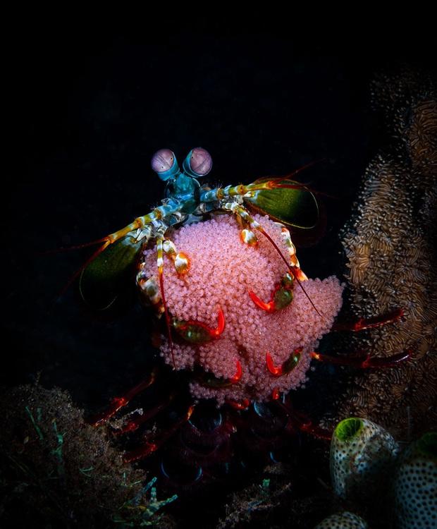Loạt ảnh đầy ấn tượng về cuộc sống đa màu sắc và cũng không kém phần diệu kỳ phía dưới đại dương sâu thẳm - Ảnh 15.