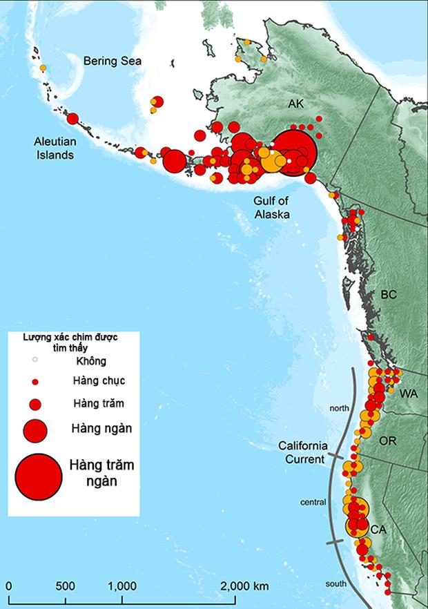 Biển ấm lên, những cụm nhiệt đại dương đã giết chết 1 triệu con chim biển - Ảnh 2.