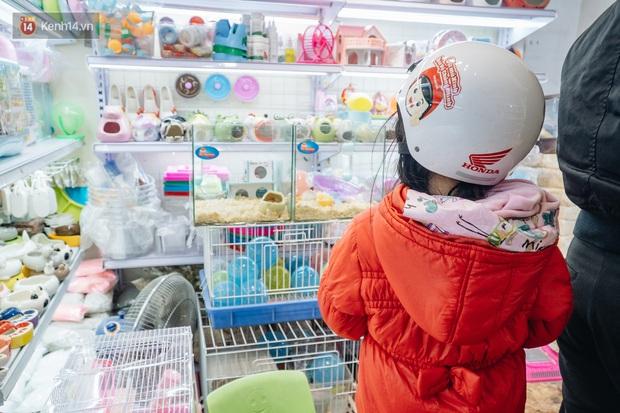 Năm Canh Tý, người trẻ tìm mua chuột hamster để giảm stress và cầu chúc may mắn - Ảnh 11.
