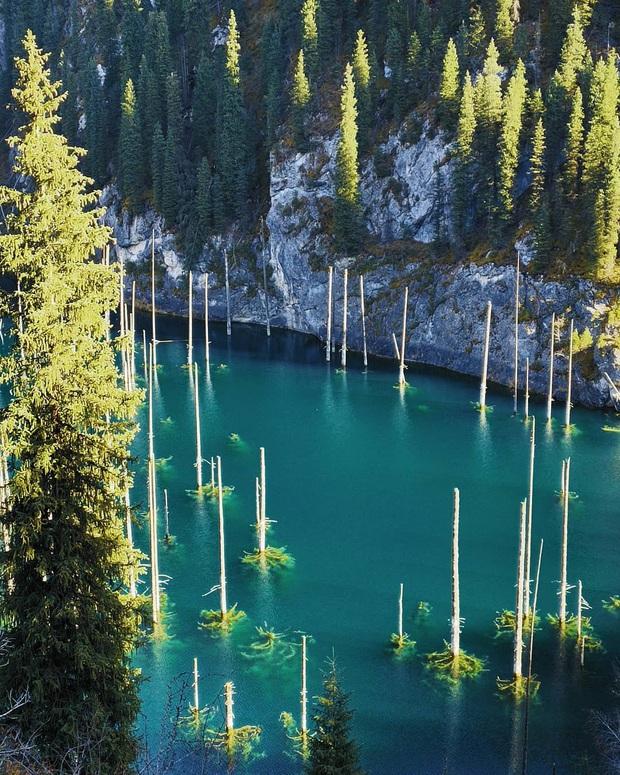 Hồ nước với những thân cây mọc ngược lên trời rùng rợn nhất thế giới, tìm ra nguyên nhân hiện tượng lạ ai cũng bất ngờ - Ảnh 7.