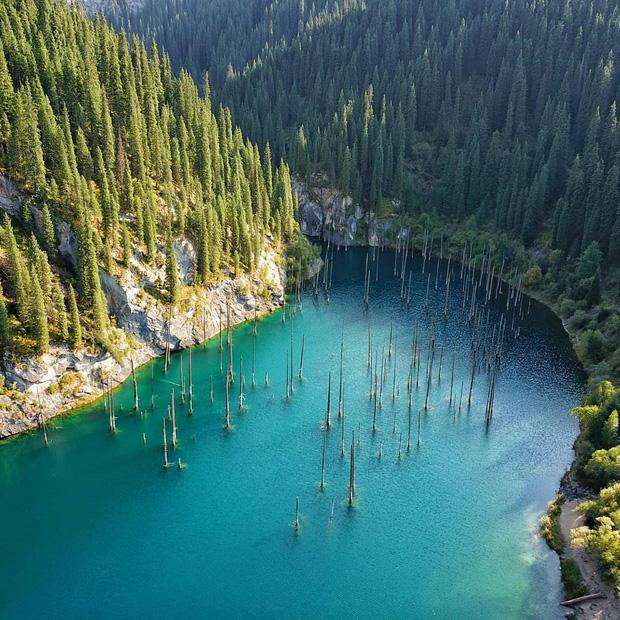 Hồ nước với những thân cây mọc ngược lên trời rùng rợn nhất thế giới, tìm ra nguyên nhân hiện tượng lạ ai cũng bất ngờ - Ảnh 3.