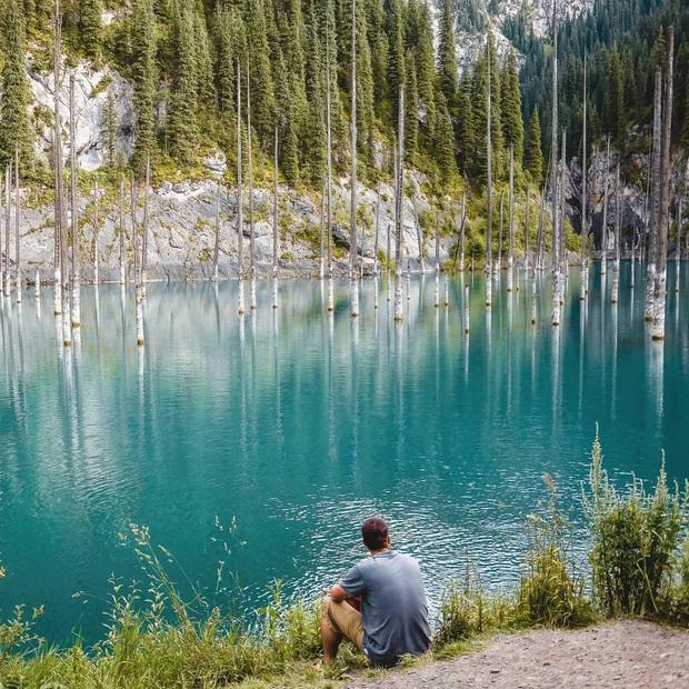 Hồ nước với những thân cây mọc ngược lên trời rùng rợn nhất thế giới, tìm ra nguyên nhân hiện tượng lạ ai cũng bất ngờ - Ảnh 4.