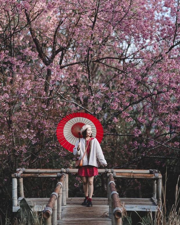 Nếu ngán ngẩm với cảnh tượng chen chúc check-in cùng mai anh đào ở Đà Lạt, bạn có thể chơi lớn sang Thái Lan ngắm rừng hoa đẹp như ngôn tình này - Ảnh 3.