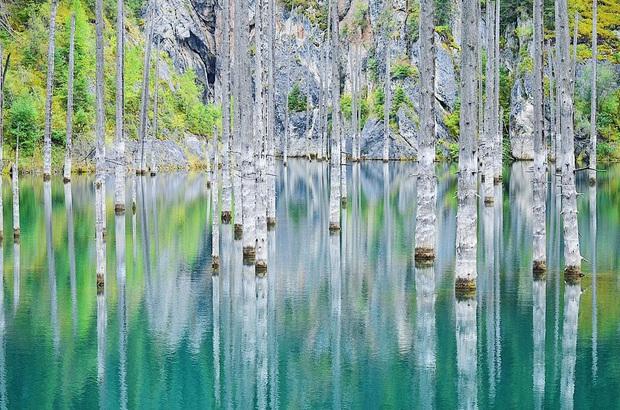 Hồ nước với những thân cây mọc ngược lên trời rùng rợn nhất thế giới, tìm ra nguyên nhân hiện tượng lạ ai cũng bất ngờ - Ảnh 11.