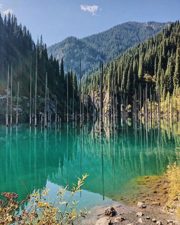 Hồ nước với những thân cây mọc ngược lên trời rùng rợn nhất thế giới, tìm ra nguyên nhân hiện tượng lạ ai cũng bất ngờ - Ảnh 16.
