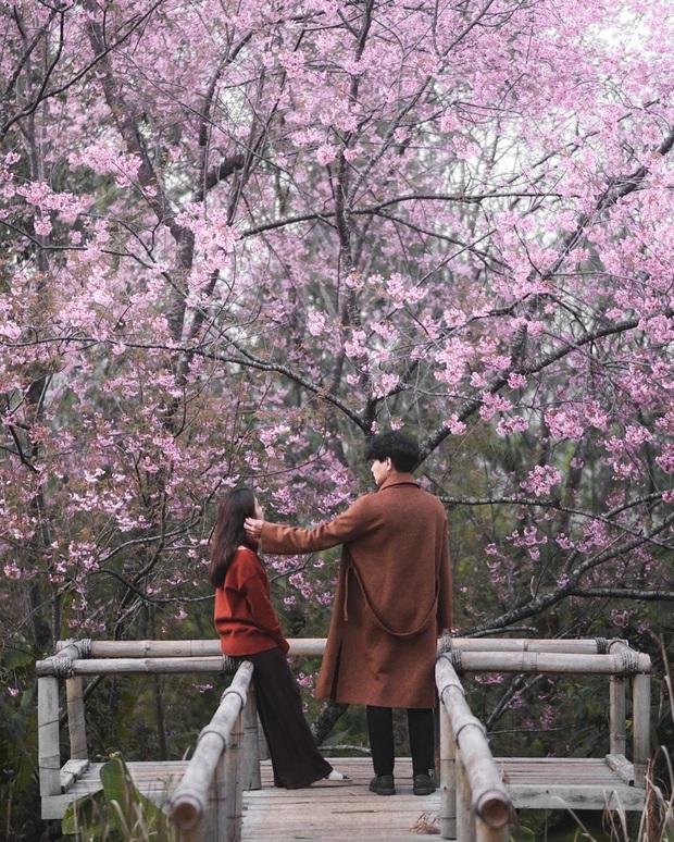 Nếu ngán ngẩm với cảnh tượng chen chúc check-in cùng mai anh đào ở Đà Lạt, bạn có thể chơi lớn sang Thái Lan ngắm rừng hoa đẹp như ngôn tình này - Ảnh 8.