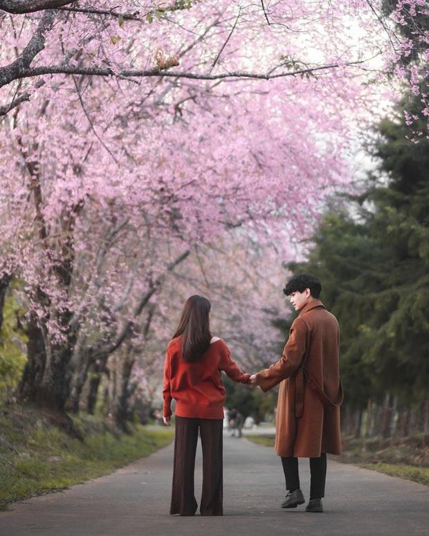 Nếu ngán ngẩm với cảnh tượng chen chúc check-in cùng mai anh đào ở Đà Lạt, bạn có thể chơi lớn sang Thái Lan ngắm rừng hoa đẹp như ngôn tình này - Ảnh 10.