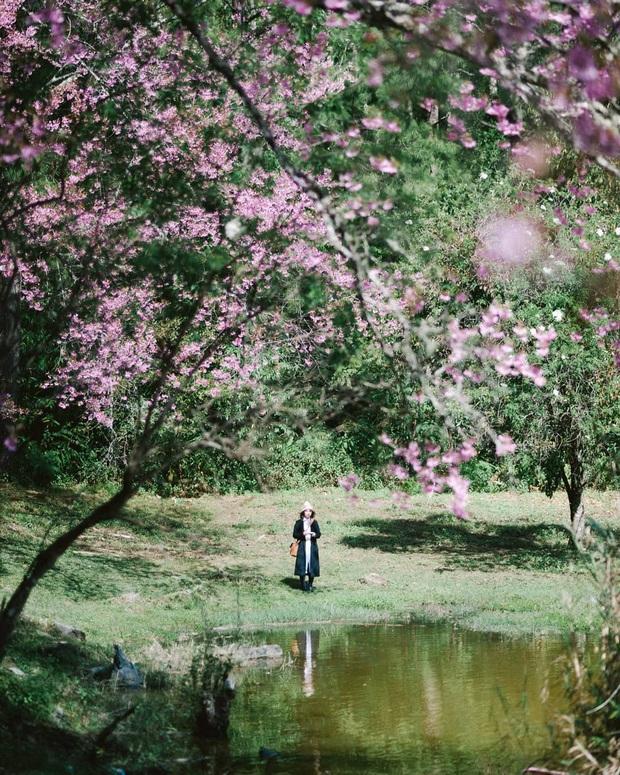 Nếu ngán ngẩm với cảnh tượng chen chúc check-in cùng mai anh đào ở Đà Lạt, bạn có thể chơi lớn sang Thái Lan ngắm rừng hoa đẹp như ngôn tình này - Ảnh 9.