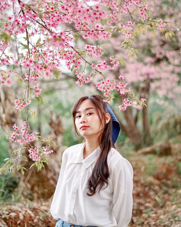 Nếu ngán ngẩm với cảnh tượng chen chúc check-in cùng mai anh đào ở Đà Lạt, bạn có thể chơi lớn sang Thái Lan ngắm rừng hoa đẹp như ngôn tình này - Ảnh 15.