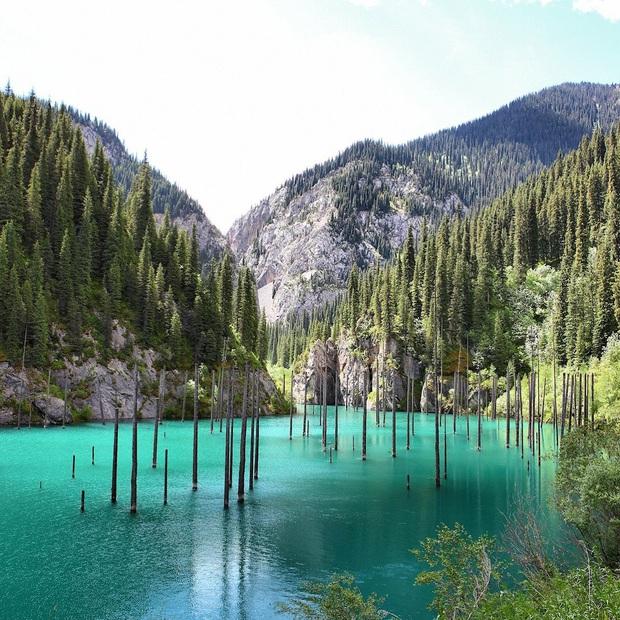 Hồ nước với những thân cây mọc ngược lên trời rùng rợn nhất thế giới, tìm ra nguyên nhân hiện tượng lạ ai cũng bất ngờ - Ảnh 6.