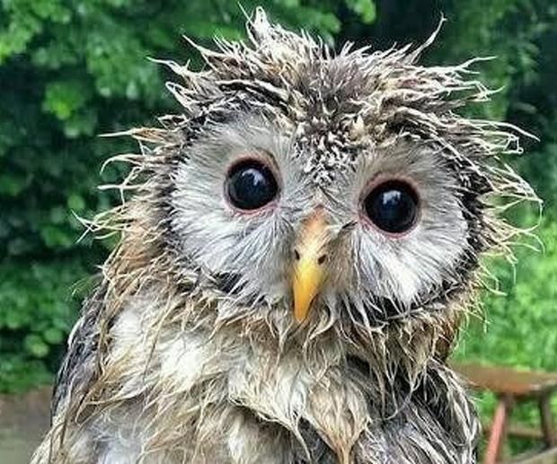 Nhìn loạt ảnh về động vật sau chắc hẳn ai cũng phải thốt lên rằng Mẹ thiên nhiên thật sự biết tấu hài đấy! - Ảnh 13.