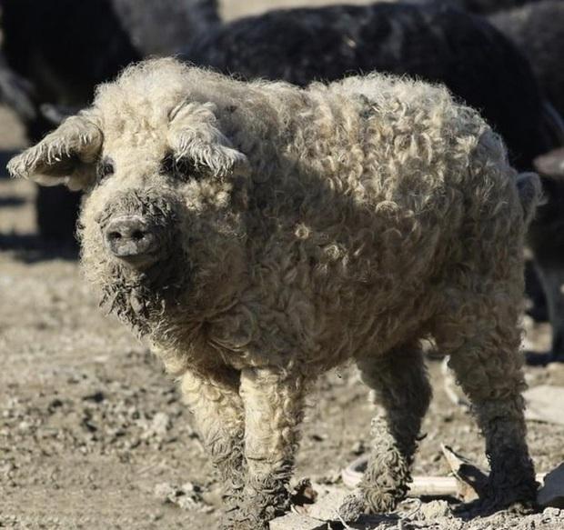 Nhìn loạt ảnh về động vật sau chắc hẳn ai cũng phải thốt lên rằng Mẹ thiên nhiên thật sự biết tấu hài đấy! - Ảnh 10.
