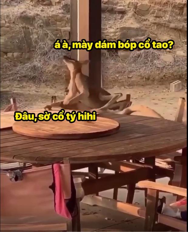Xô xát tại quán bar, 2 đại ca chuột túi lao vào choảng nhau túi bụi - Ảnh 3.