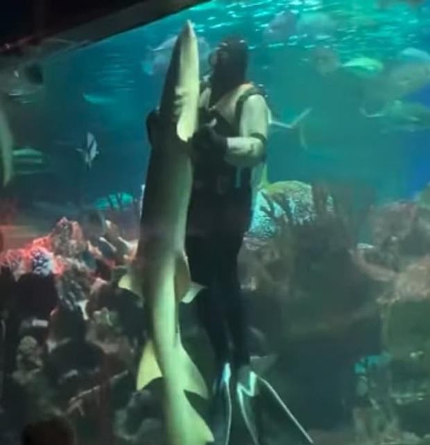 Bắt gặp cảnh cá mập khiêu vũ với thợ lặn trong thủy cung ở trung tâm thương mại, cư dân mạng đồng loạt lên án hành vi ngược đãi động vật - Ảnh 2.