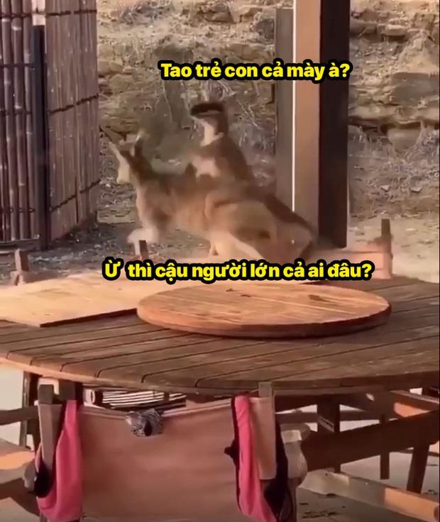 Xô xát tại quán bar, 2 đại ca chuột túi lao vào choảng nhau túi bụi - Ảnh 5.