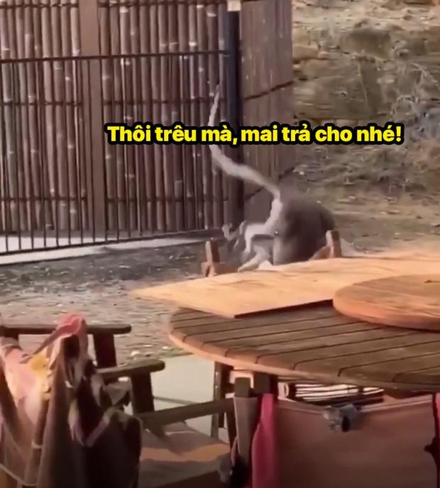 Xô xát tại quán bar, 2 đại ca chuột túi lao vào choảng nhau túi bụi - Ảnh 10.