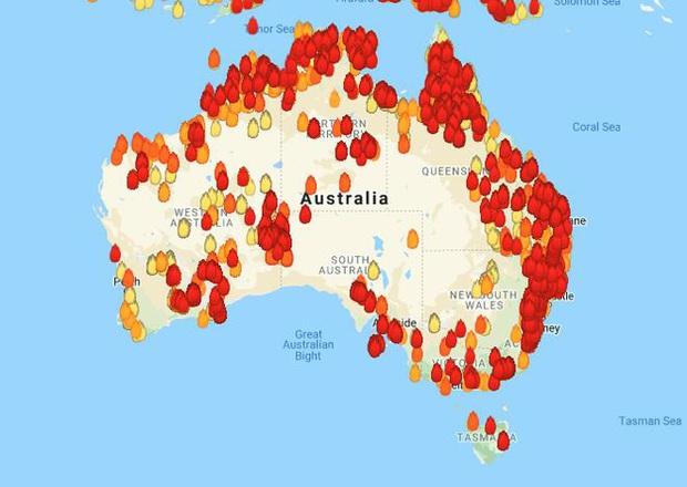 Chứng kiến gia súc đau đớn vì bỏng nặng do hỏa hoạn kinh hoàng tại Úc, nông dân xót xa bắn chết 20 con bò để giải thoát cho chúng - Ảnh 7.