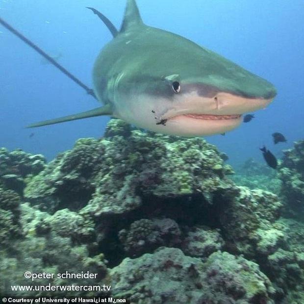 Nỗi đau thầm lặng của đại dương: Khoa học xác định hàng triệu cá mập có lưỡi câu mắc sâu trong da thịt, tác động của loài người đã lớn quá rồi - Ảnh 1.