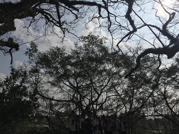 Pha chụp ảnh xấu không tưởng: Hào hứng nhờ chụp view đẹp, lớp học nhận cái kết đắng âm u như cô hồn đứng dưới bóng cây - Ảnh 1.