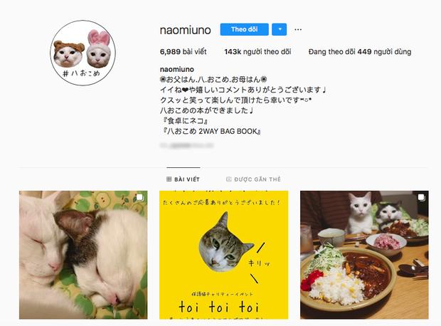 """Hai chú mèo trở thành ngôi sao Instagram nhờ… ngồi nhìn """"con sen"""" ăn cơm: Bày biện đủ món mà boss chả được cơm cháo gì! - Ảnh 1."""