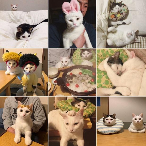 """Hai chú mèo trở thành ngôi sao Instagram nhờ… ngồi nhìn """"con sen"""" ăn cơm: Bày biện đủ món mà boss chả được cơm cháo gì! - Ảnh 2."""