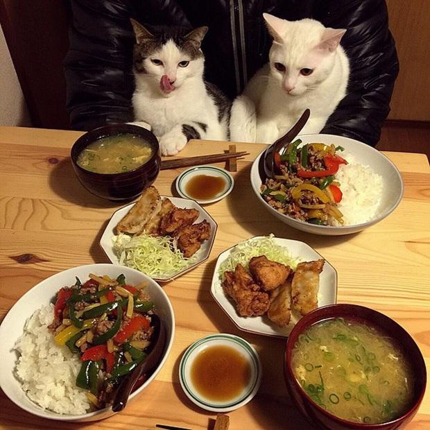 """Hai chú mèo trở thành ngôi sao Instagram nhờ… ngồi nhìn """"con sen"""" ăn cơm: Bày biện đủ món mà boss chả được cơm cháo gì! - Ảnh 4."""