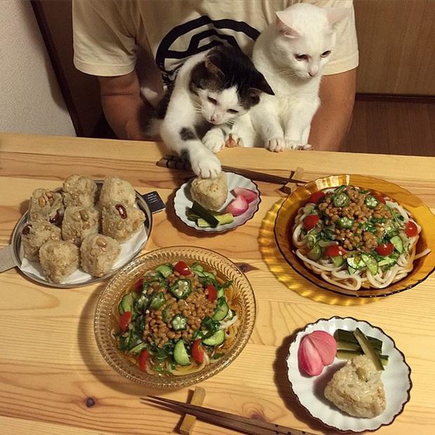 """Hai chú mèo trở thành ngôi sao Instagram nhờ… ngồi nhìn """"con sen"""" ăn cơm: Bày biện đủ món mà boss chả được cơm cháo gì! - Ảnh 6."""