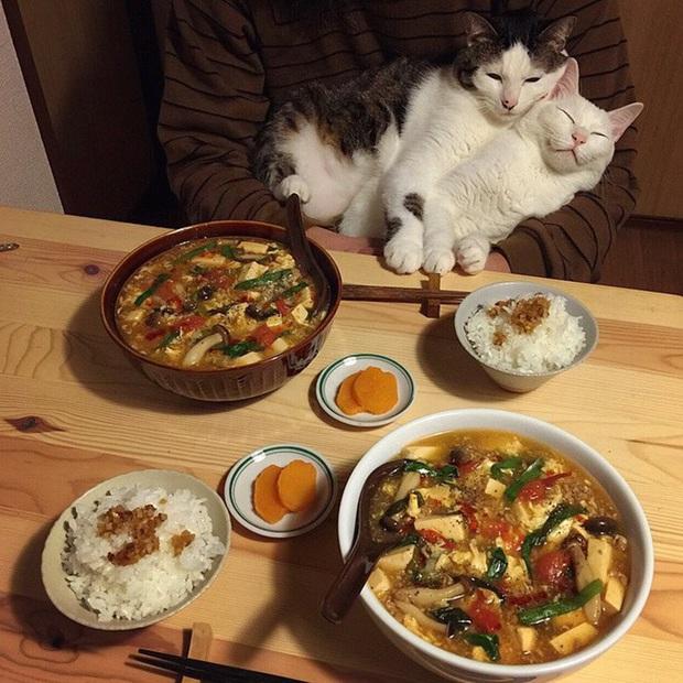 """Hai chú mèo trở thành ngôi sao Instagram nhờ… ngồi nhìn """"con sen"""" ăn cơm: Bày biện đủ món mà boss chả được cơm cháo gì! - Ảnh 13."""