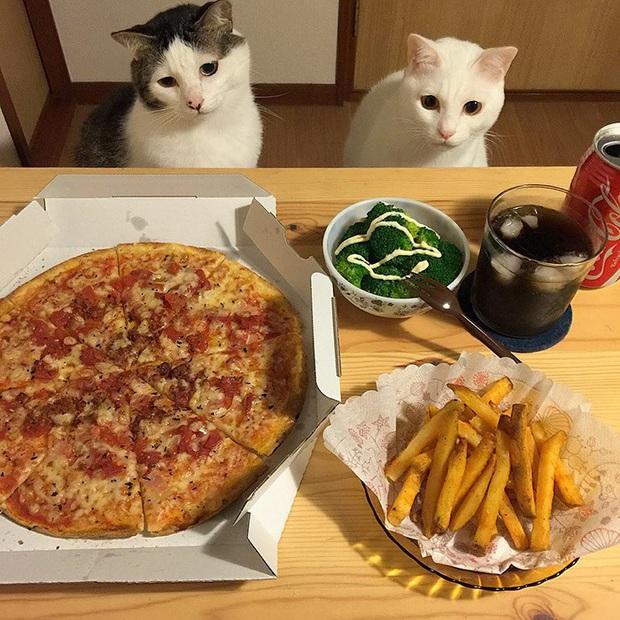 """Hai chú mèo trở thành ngôi sao Instagram nhờ… ngồi nhìn """"con sen"""" ăn cơm: Bày biện đủ món mà boss chả được cơm cháo gì! - Ảnh 12."""