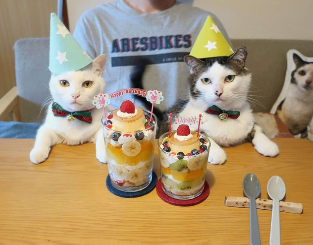 """Hai chú mèo trở thành ngôi sao Instagram nhờ… ngồi nhìn """"con sen"""" ăn cơm: Bày biện đủ món mà boss chả được cơm cháo gì! - Ảnh 14."""