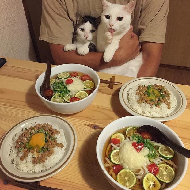 """Hai chú mèo trở thành ngôi sao Instagram nhờ… ngồi nhìn """"con sen"""" ăn cơm: Bày biện đủ món mà boss chả được cơm cháo gì! - Ảnh 11."""