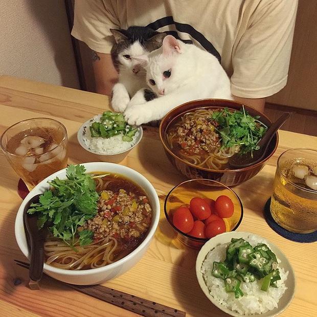 """Hai chú mèo trở thành ngôi sao Instagram nhờ… ngồi nhìn """"con sen"""" ăn cơm: Bày biện đủ món mà boss chả được cơm cháo gì! - Ảnh 10."""