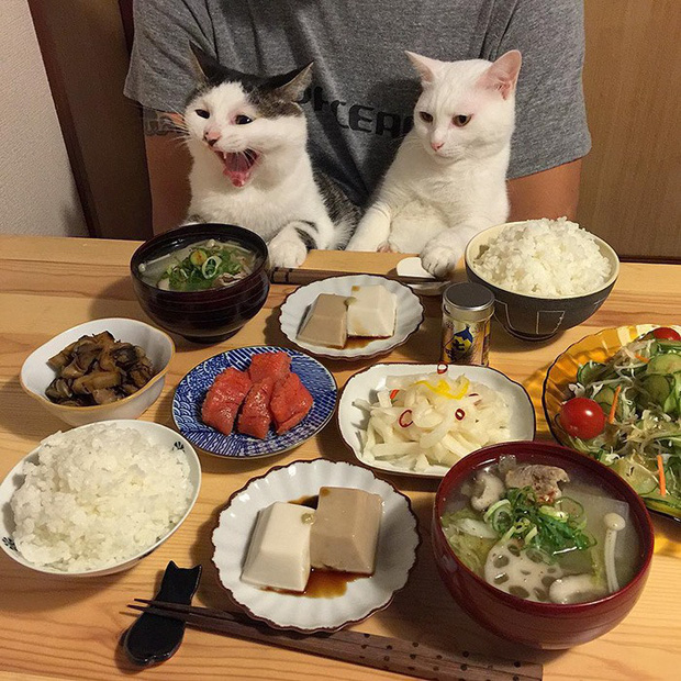 """Hai chú mèo trở thành ngôi sao Instagram nhờ… ngồi nhìn """"con sen"""" ăn cơm: Bày biện đủ món mà boss chả được cơm cháo gì! - Ảnh 5."""