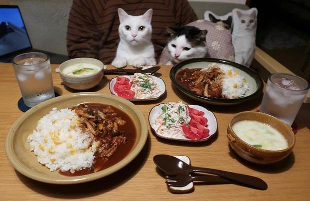 """Hai chú mèo trở thành ngôi sao Instagram nhờ… ngồi nhìn """"con sen"""" ăn cơm: Bày biện đủ món mà boss chả được cơm cháo gì! - Ảnh 9."""