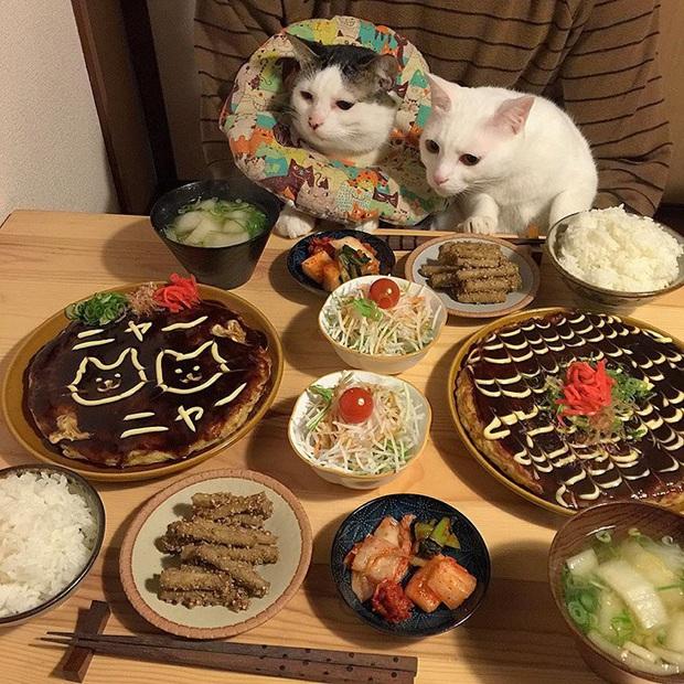 """Hai chú mèo trở thành ngôi sao Instagram nhờ… ngồi nhìn """"con sen"""" ăn cơm: Bày biện đủ món mà boss chả được cơm cháo gì! - Ảnh 8."""