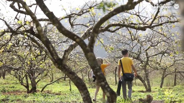 Clip: Vẻ đẹp ngỡ ngàng giữa rừng mận nở bung hoa trắng cả thung lũng ở Mộc Châu ngày giáp Tết - Ảnh 4.