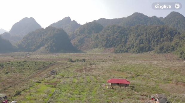 Clip: Vẻ đẹp ngỡ ngàng giữa rừng mận nở bung hoa trắng cả thung lũng ở Mộc Châu ngày giáp Tết - Ảnh 2.