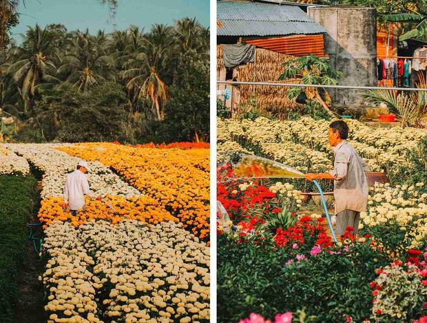 Đứng hình với loạt ảnh làng hoa Tết đẹp nhất miền Tây rực rỡ sắc màu từ trên cao, hoá ra lại nằm gần xịt Sài Gòn - Ảnh 6.