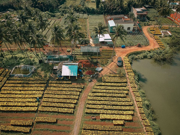 Đứng hình với loạt ảnh làng hoa Tết đẹp nhất miền Tây rực rỡ sắc màu từ trên cao, hoá ra lại nằm gần xịt Sài Gòn - Ảnh 10.