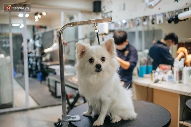 Sướng như boss dịp Tết: Sen đưa đi làm đẹp xong gửi vào khách sạn chó mèo siêu sang chảnh giá tiền triệu - Ảnh 8.