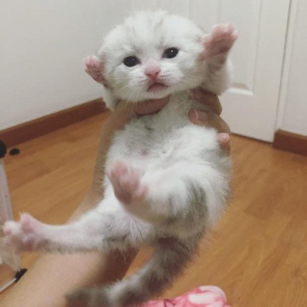 Mới tí tuổi đã có bụng bia, mèo em chã khiến sen lo phát sốt nhưng bác sĩ bảo chỉ bị béo phì thôi - Ảnh 3.