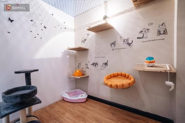 Sướng như boss dịp Tết: Sen đưa đi làm đẹp xong gửi vào khách sạn chó mèo siêu sang chảnh giá tiền triệu - Ảnh 4.