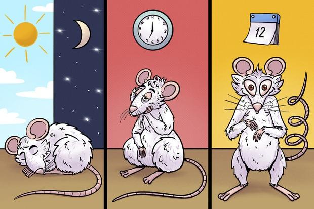Tác hại kinh khủng của việc thiếu ngủ: Não bộ của bạn có thể tự ăn chính nó và đây là cách để thảm họa này không xảy ra - Ảnh 3.